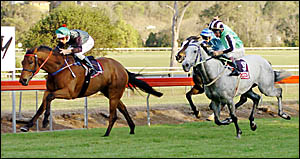 HABIT-FORMING: Glen Colless steers Arena Valadora to the Lismore Cup yesterday