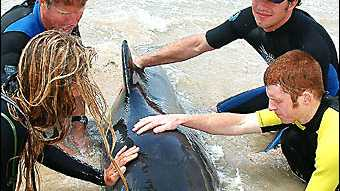 RESCUE ATTEMPT: New Brighton man Barry Ricketts, second from left, who discovered the beached whale.
