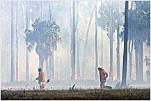 Firefighters battling the blaze yesterday.