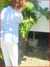 Dorothy Fox surveys her back yard. Picture: Warwick Daily News