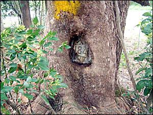 The surveyor?s mark on the tree.