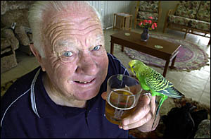 DRINKING?S FOR THE BIRDS: Athol Lewis of Ballina Heights and his fifteen-year-old budgie Peter, who loves a beer.