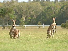 A boy was hospitalised after a kangaroo attack.