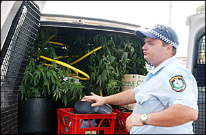 Cannabis plants are loaded into a police van.