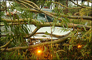 A woman driver was treated by ambulancemen after her car collided with a fallen tree on the Armidale Road on Saturday.