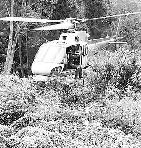DRUG BUST: A police helicopter hovers above cannabis plants in an unidentified location in the region this week.