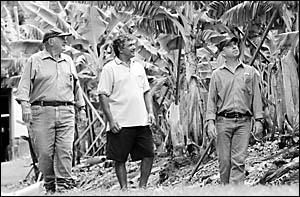 Tom Day, Nicky Singh and Tony Heidrich on a tour of Mr Singh?s West Korora banana plantation.