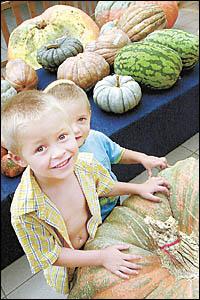 PUMPKIN APLENTY: Growers survey the sea of pumpkins on display at the Alstonville Plaze on Saturday.