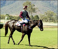 The magnificent looking galloper Conspiracy with Mark Barnham on his back.