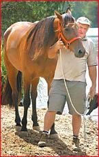 Alan Treadwell with his horse Glenburns Arm. Photo: Mark Straker