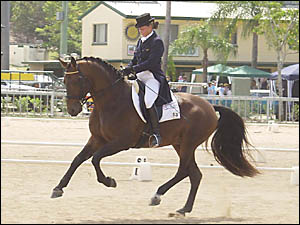 IT?S SHOWTIME: Sally Evans impresses the judges with her canter on Basil at the Murwillumbah show.