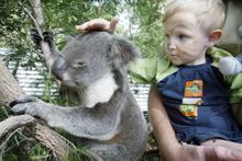 Sajan Corry-Rose pats koala Clancy Junior
