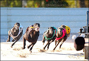 Fleet Assassin beats Lord Aragorn and Direct Energy in race 5, the North Coast Challenge, 5th Grade, over 407m.