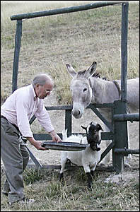 William Skyvington with goat and donkey on his three hectare rural property in France.