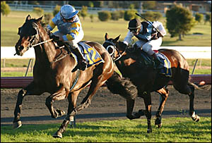 Jockey Allan Robinson has a look back at the remaining horses as he pilots Saranac to victory