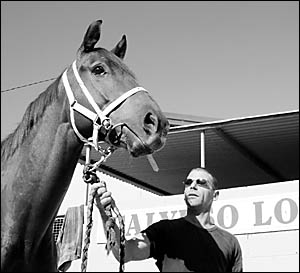 Rocky Xuereb, stable foreman for Coffs Harbour trainer Ken Lantry with four-year-old gelding Mr Voodoo who will start in the fi