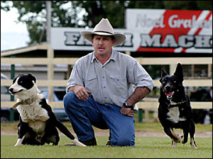 MURWILLUMBAH?S David Toms has entered two dogs in tomorrow?s trials, Ben (left) and Darky. Ben is one of a few dogs that can st