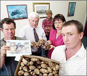 TWEED taro grower Leo Burgoyne (left) is joined by Shadow Agriculture Minister Gavin O?Connor, farmer Geoff Julius, Member for