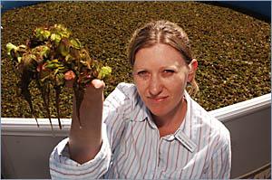 WEED BUSTER: Department of Primary Industries best practice officer, aquatic weeds, Elissa van Oosterhout, with problem weed sa