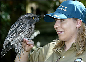 Jacqui Seal, a volunteer graduate at David Fleay Wildlife Park, tends to a tawny frogmouth owl which was injured when hit by a