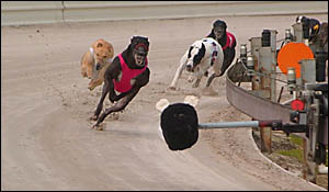 Race four at the Grafton track on Saturday, an event won by High Ace, followed by Chaptian Ice and Pick a Pocket.