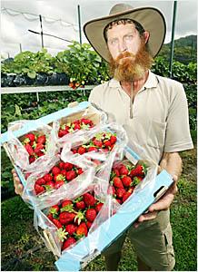 MURWILLUMBAH district strawberry farmer David Montgomery