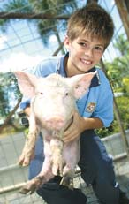Bundaberg State High School Luke Moody gets up close and personal with a piglet.
