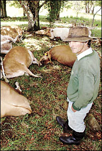 STRUCK DOWN: Warwick Marks and his family, of Dorrigo, lost 68 cows to lightning on Monday. They have been overwhelmed with off