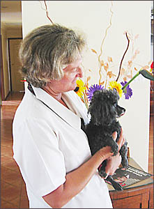 Lynne Brokmann doesn?t think 13-year-old, toothless, near-blind and near-deaf toy poodle, Gemma, is much of a threat to koalas