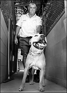 Lismore City Council ranger Col Shepherd with a pit bull terrier cross found wandering in the Lismore CBD earlier this week. Th