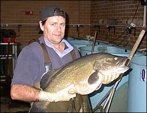 Former Grafton scientist Dr Brett Ingram, who last year received an award for his work with Murray cod.