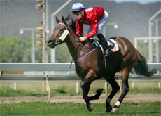 BIG WIN: Dan Ballard steers Sessantanove to a thrilling vicotry at Callaghan Park yesterday.