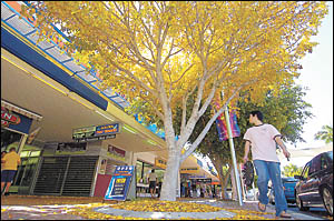 If it hadn?t been so hot lately, pedestrians walking through Coffs Harbour?s City Centre could be mistaken for thinking they we