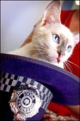This little kitten was found at the Gladstone police station and is in need of a good home.