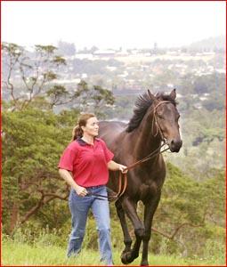 Toowoomba trainer Jennie Fraser walks Pipe Dream. Image: NEV MADSEN