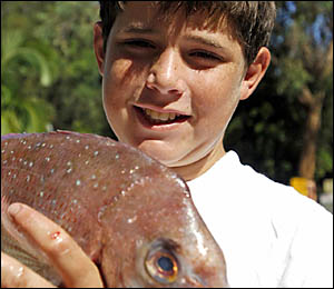 FISHERMAN?S FRIEND: Jeremy Cooper, 12, of South Grafton, shows the fruits of his labour at the Minnie Water family fishing day.
