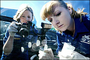 THE Tweed?s new Scene of Crime team Haylee Buckle (left) and Nicole Maher take evidence from a car window. Photo: TOM WYNESS