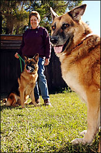 CANNY CANINES:Emma, left, and Dusty have earned themselves and their owner Judy Attwater a prestigious outstanding achievement