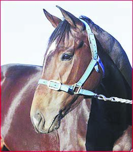 Star Shiraz enjoys a leisurely time this week in the lead-up to today's Stradbroke Handicap. Picture: KEVIN FARMER