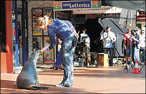 Lights, camera, action! Pet Porpoise Pool seal, Cindy, begins filming of the new Lotto advertisement. In this scene Cindy check