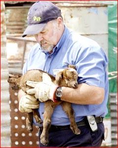 RSPCA volunteer Kevin Richards cradles a sick goat.Pic: Neville Madsen