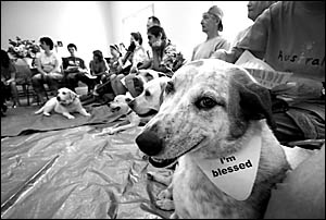 Patch was pretty proud of himself after receiving his ?I?m blessed? bandanna at this week?s Blessing of the Animals ceremony.
