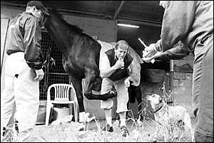 Coffs Harbour veterinarian Dr David Johnson will be taking a short break from looking after local horses to head to the Beijing