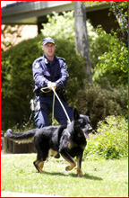 Toowoomba police and the dog squad searched for a man in Rangeville yesterday morning. Picture: Nev Madsen