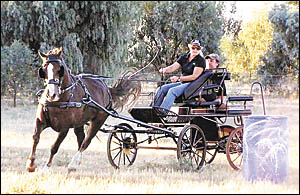 Robyn and Ian Schmetzer driving their horse Rosey in one of the new carriages imported from Poland by Gary Rollans.