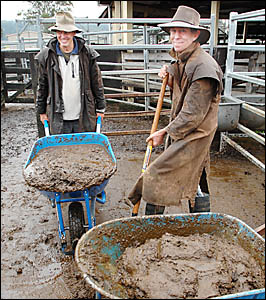 DIRTY JOB: Removing rain-soaked cattle manure the hard way at the Lismore Saleyards yesterday are Eric Grissell (left) and sale