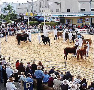 CHANGING OF THE GUARD: Beef Week president Terry Serone says the current board believes it is time to hand over the organising