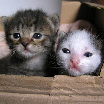 Awww, cute. Homeless kittens. Will the Wiggle rescue them in time?