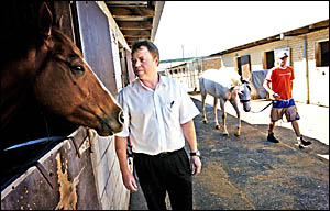 QUARANTINED: Stephen Taylor, secretary/manager of the Ballina Jockey Club, checks out one of the horses at the clubs stable co