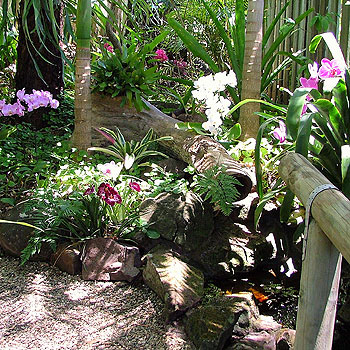 Colour Abounds In This Beautiful Buderim Garden